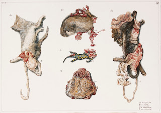 egg tempera, painting, drawing, illustration, roadkill