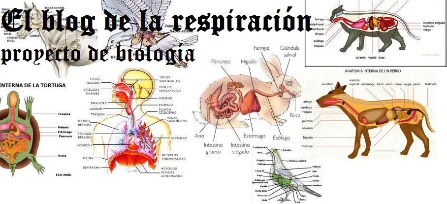 Retroalimentación: SISTEMA RESPIRATORIO HUMANO