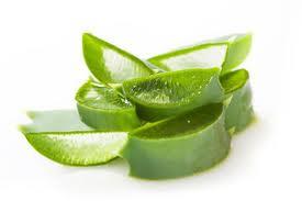 sejumlah manfaat dan khasiat lidah buaya (aloe vera) untuk tubuh manusia