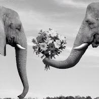 Taller pareja ideal
