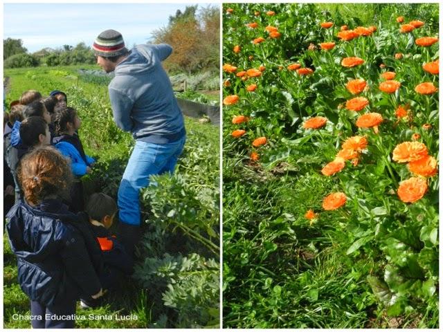 También se cosechan las flores - Chacra Educativa Santa Lucía