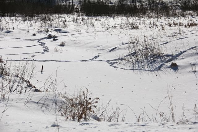 deer trails in the snow
