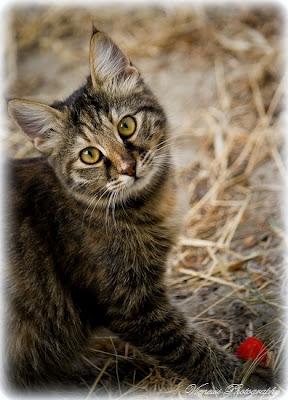 Zdjęcie przedstawiające kota z ptasiej perspektywy, kompozycja