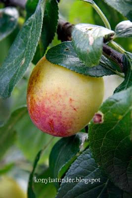 august-in-the-garden-plum