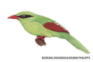 Hutan Jawa Menipis, Si Betet Jadi Kritis
