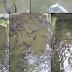 Beberapa hal penting tentang budidaya ikan lele