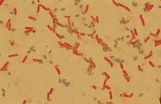 Hệ vi sinh vật đường ruột đặc  trưng cho từng loài. Ảnh minh họa.