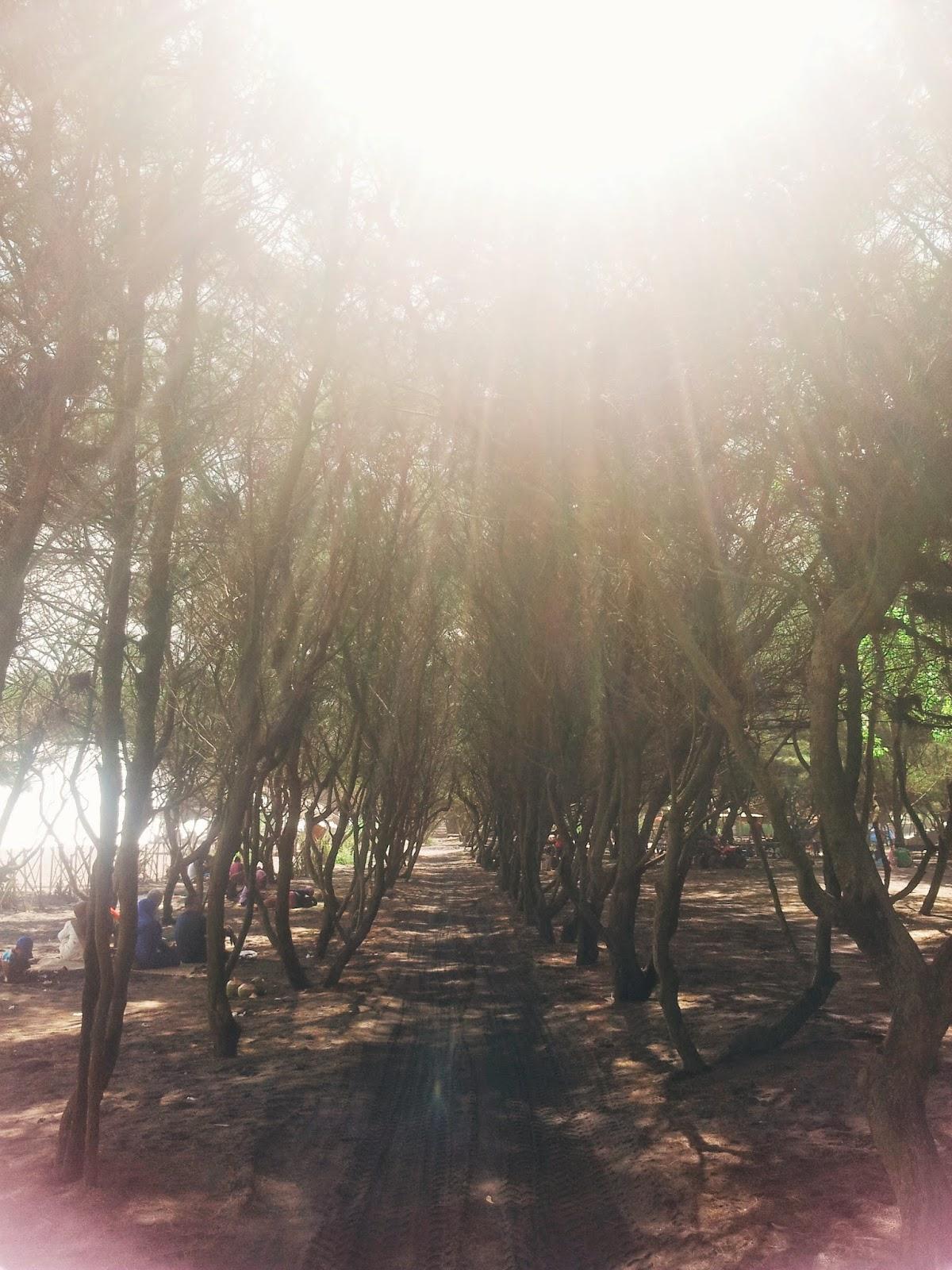 Pantai Baru in Bantul, Jogja