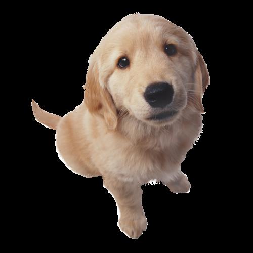 smiling dog white background - photo #13