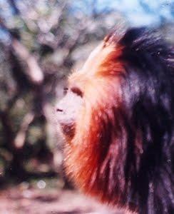 Animais do Sul da Bahia