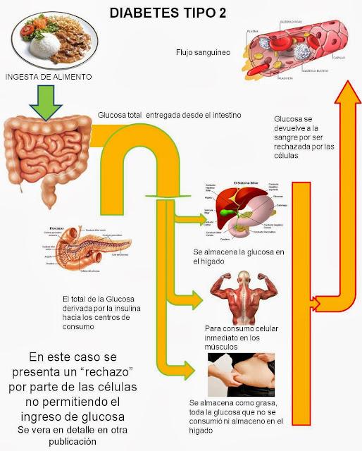 Diabetes Causas efectos y como controlarla: como funciona