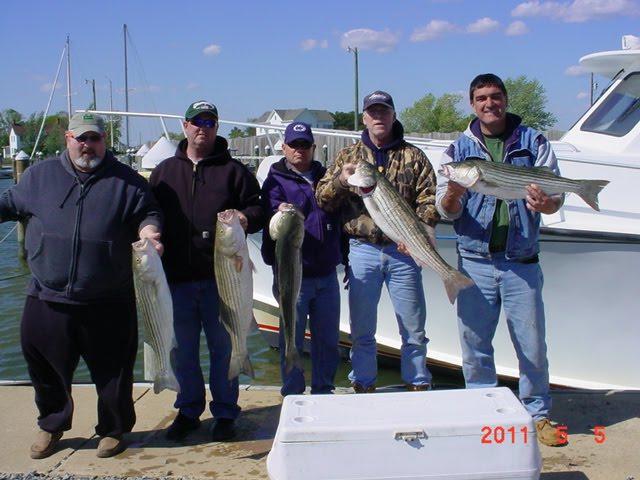 Saltwater report chesapeake bay charter fishing for Virginia saltwater fishing report