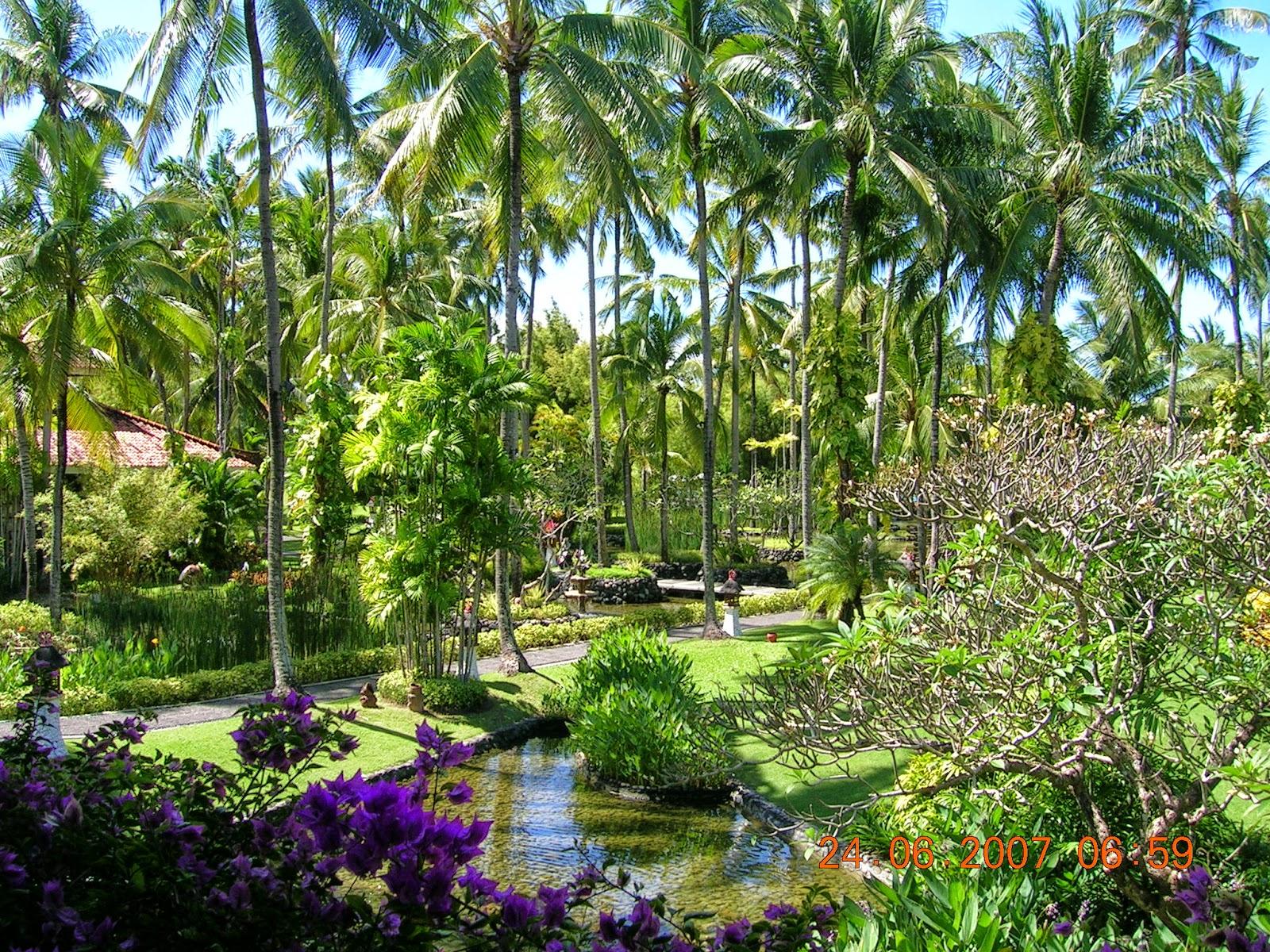 plantas jardins tropicais : plantas jardins tropicais:Não utilize as plantas podadas em topiaria, como buxinhos, as cercas