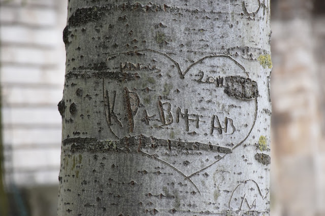 Paris arbre amour