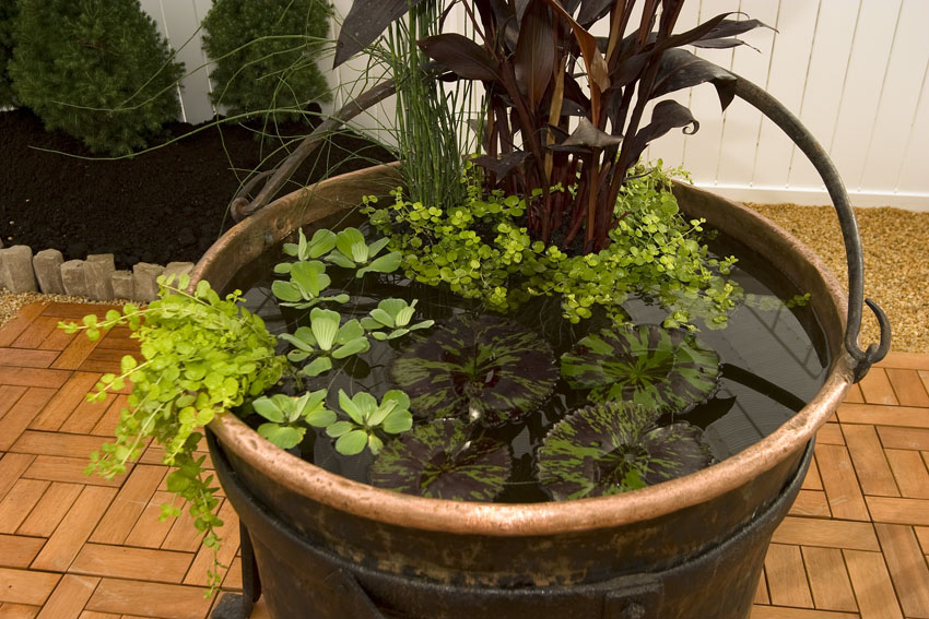Maricopa County Home Shows Create A Container Water Garden