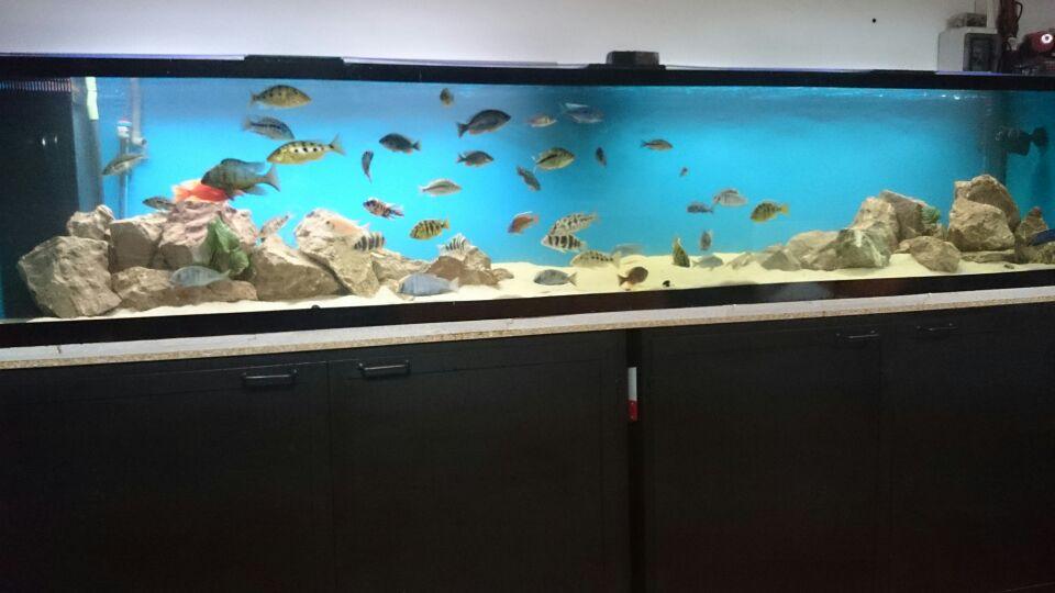 Acuario a medida acuario de litros for Precio de estanque de agua 1000 litros