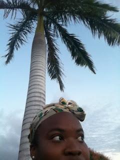 island life coconuts breeze caribbean