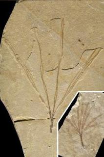 Fosil Serangga Tongkat Berusia 126 Juta Tahun