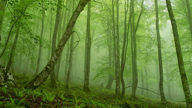 Foggy mystic forest HD Wallpaper