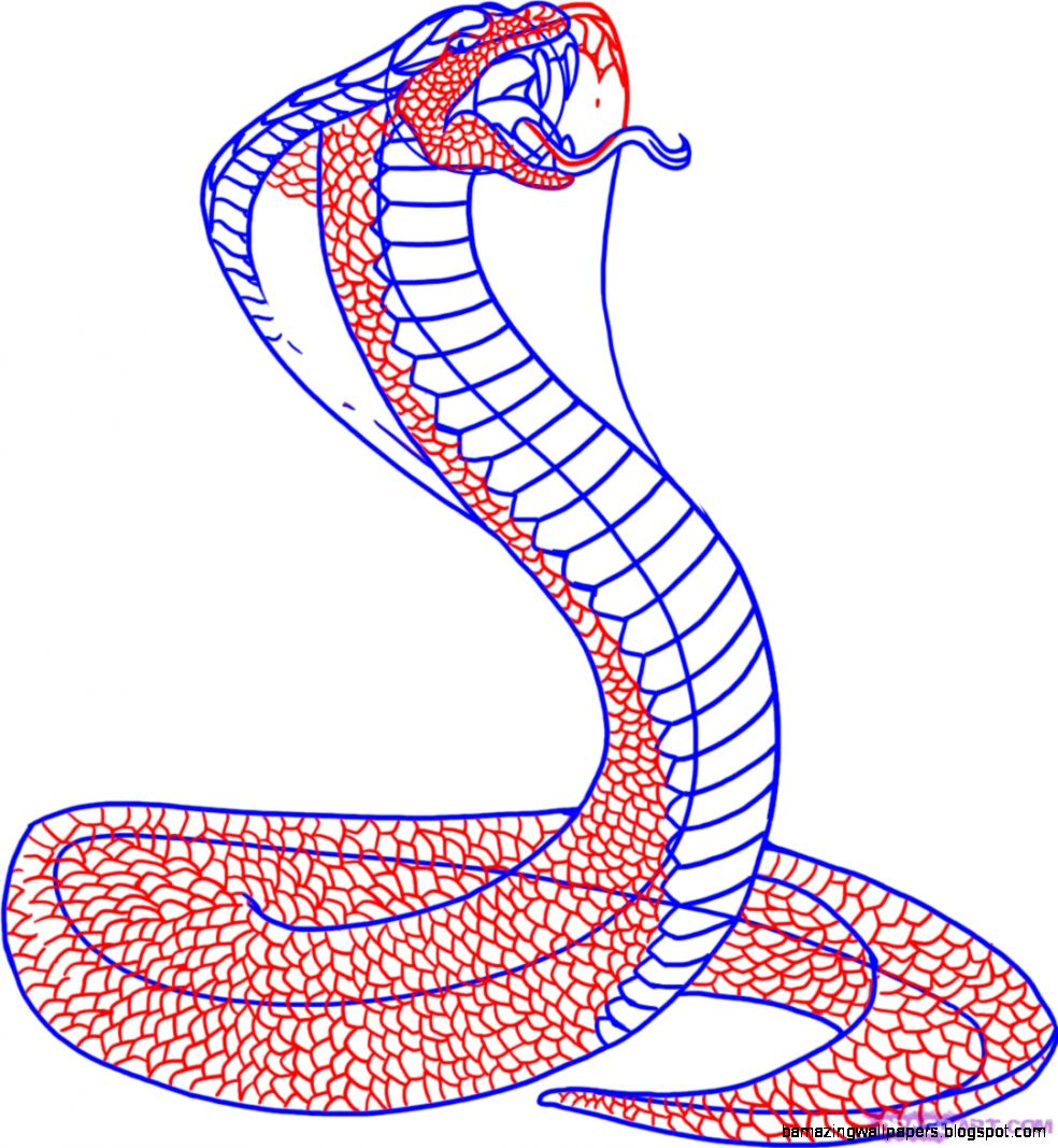 King Cobra Drawing For Kids How to Draw a Snake King Cobra