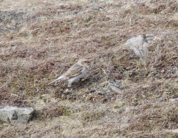 Fair Isle Bird Observatory: the Warden's diary
