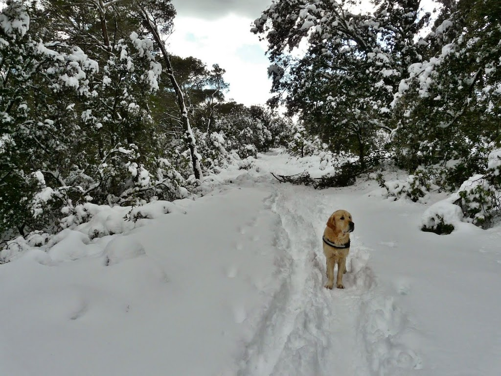 Blog de Educación canina en positivo y del Golden Retriever