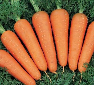 как вырастить: морковь