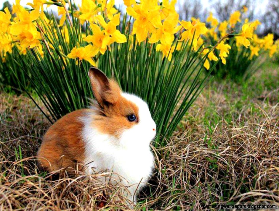 spring animal wallpapers: Spring Animal Wallpaper