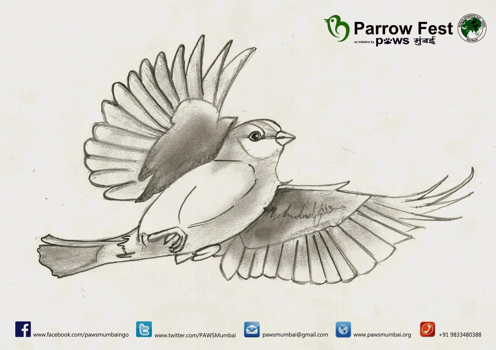 Sparrow Fest