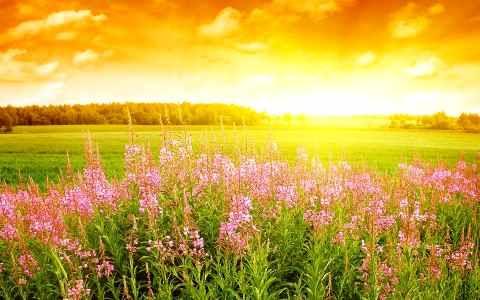 Manfaat Sinar Matahari Pagi