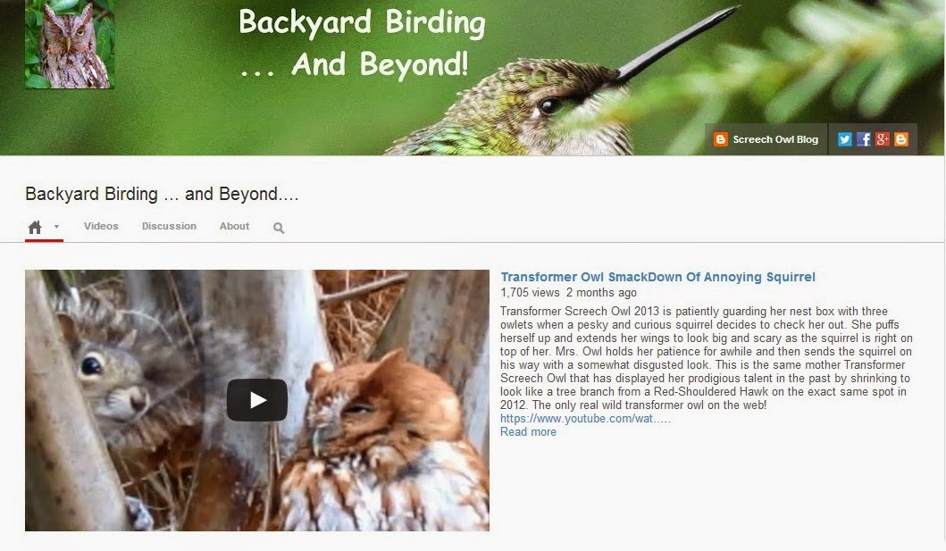 backyard birding and nature backyard birding and beyond