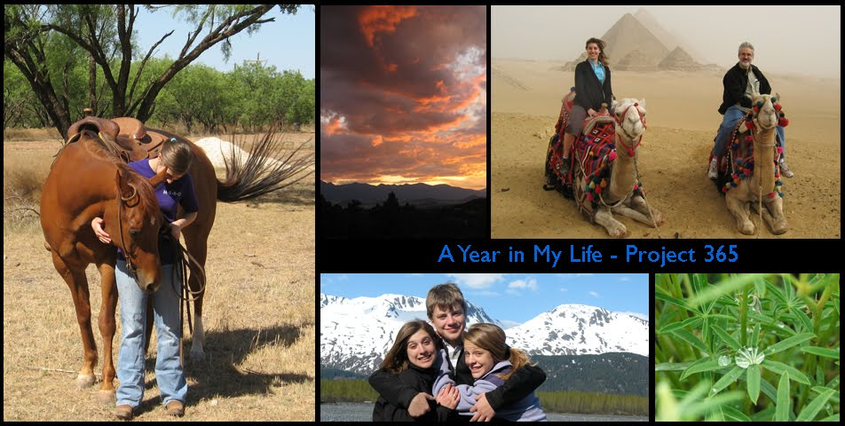 A Year in My Life - Project 365
