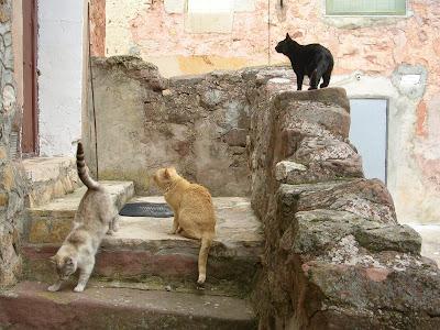 Teroleja - Gatos