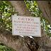 11 Pokok Yang Paling Beracun Diseluruh Dunia