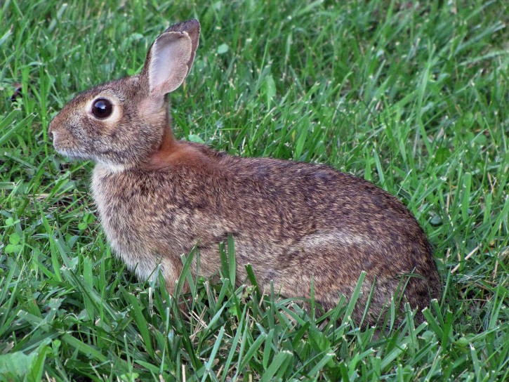 koleksi gambar kelinci lucu dan imut