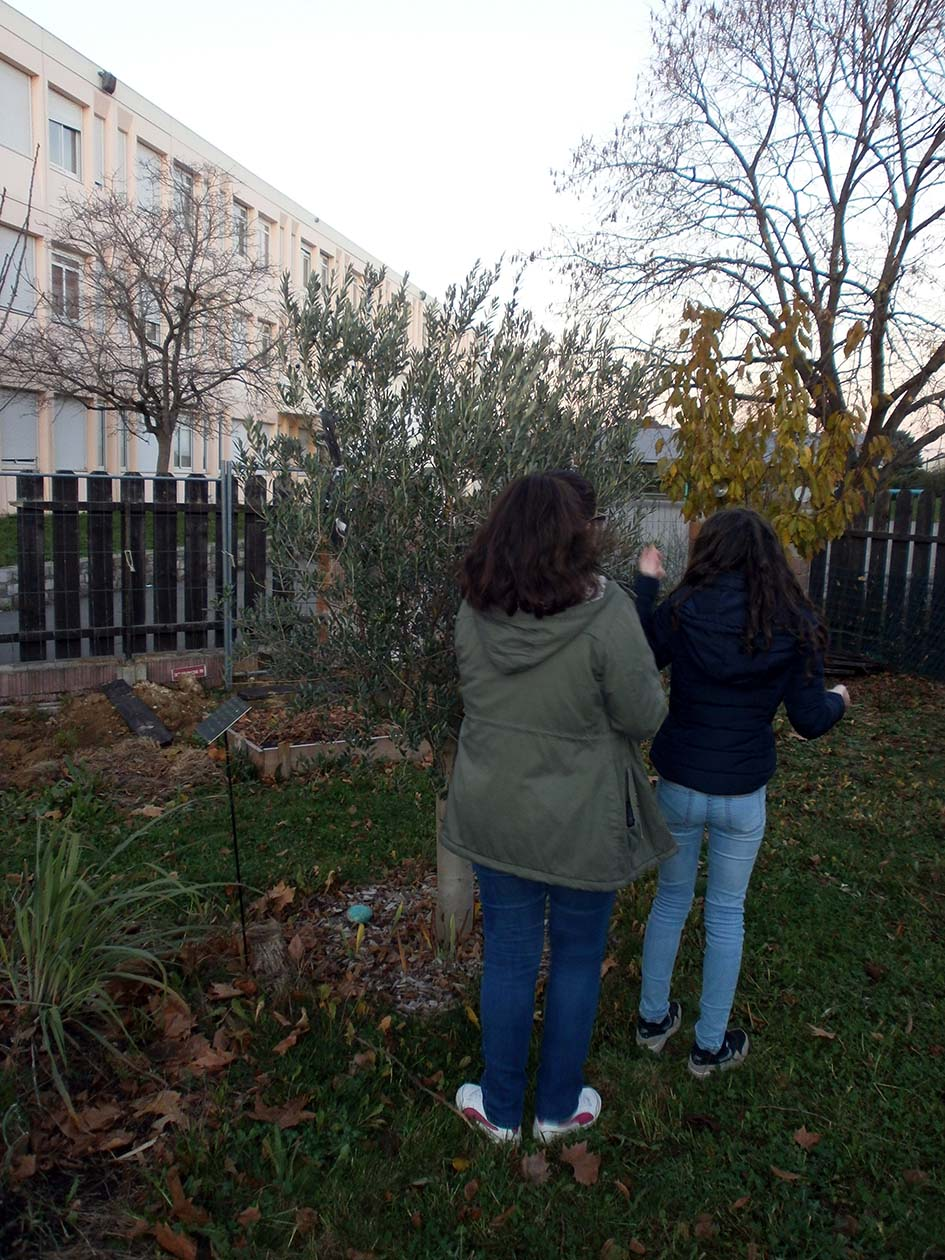 Le jardin des g teaux serge mora plantation d 39 hiver et for Jardin hiver plantation