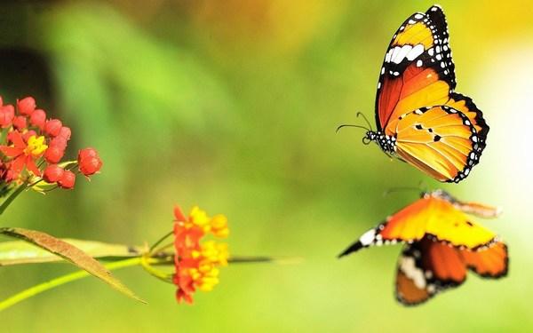 Beautiful Butterfly on Water Reflection HD Wallpaper