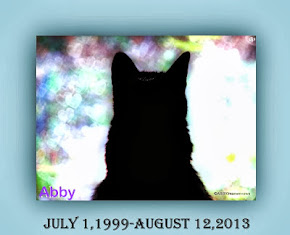 Abby remembered with love always