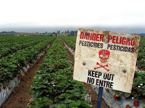 http://3.bp.blogspot.com/-L2ScqJU8OeE/TdmtpkUZpOI/AAAAAAAACcQ/L70oqLgsUWQ/s1600/pesticides%2B%25281%2529.jpg