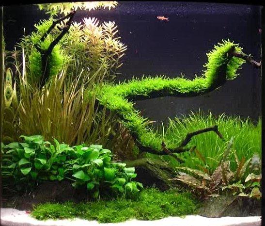 Aquarium Fish: Aquascaping For Fish Aquarium