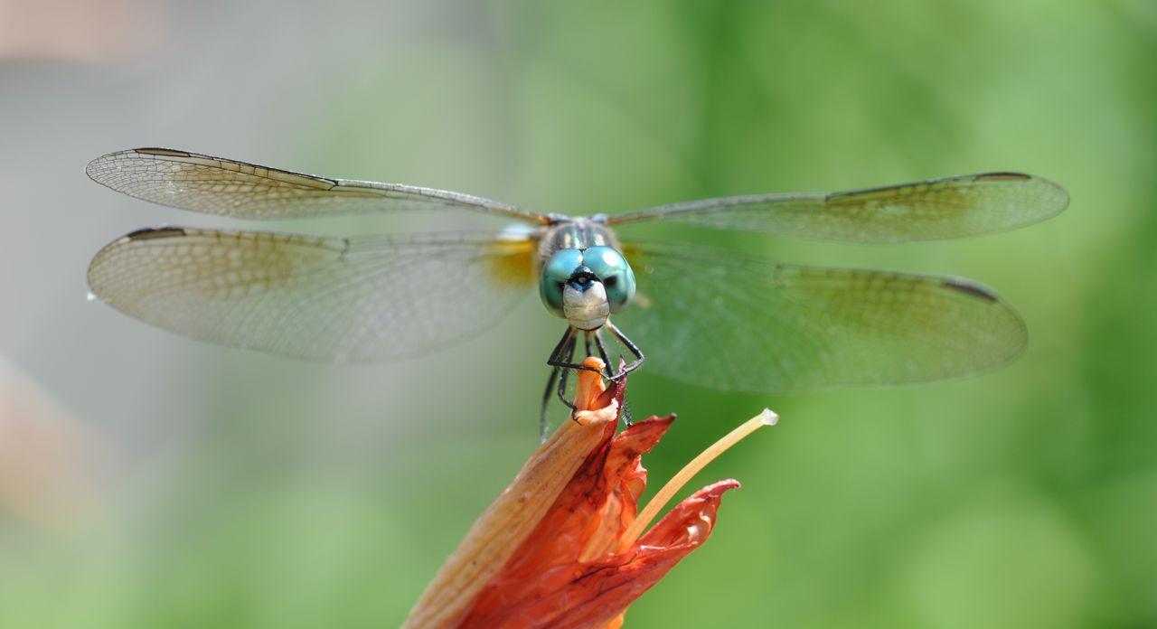 Macro dragonflies...