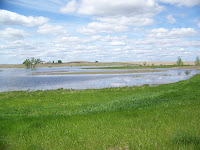 Prairie Pothole