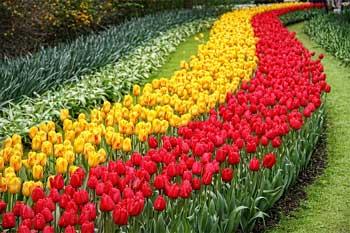 Wisata Belanda Wisata Ke Taman Bunga Tulip Keukenhof Lisse