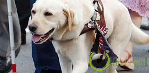 Anjing yang menyelamatkan majikannya dari runtuhan World Trade Center 9/11