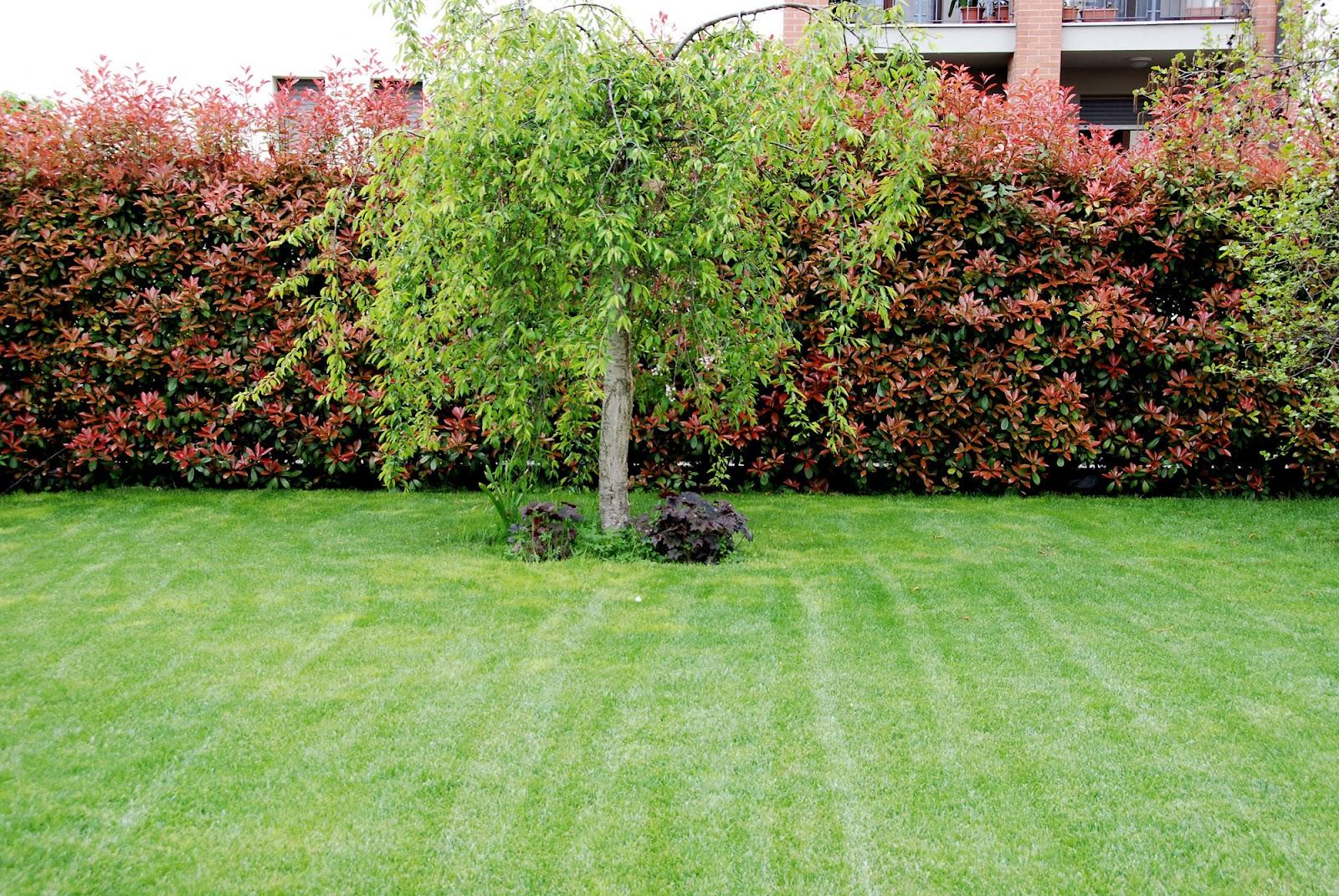 Il mondo in un giardino: Fine aprile in giardino
