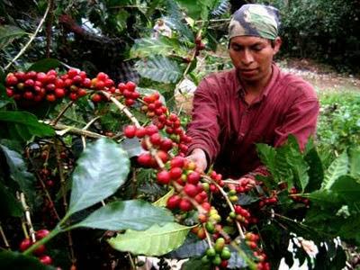 trabajo-Colombia-café.jpg