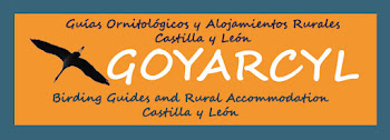 go to web goyarcyl