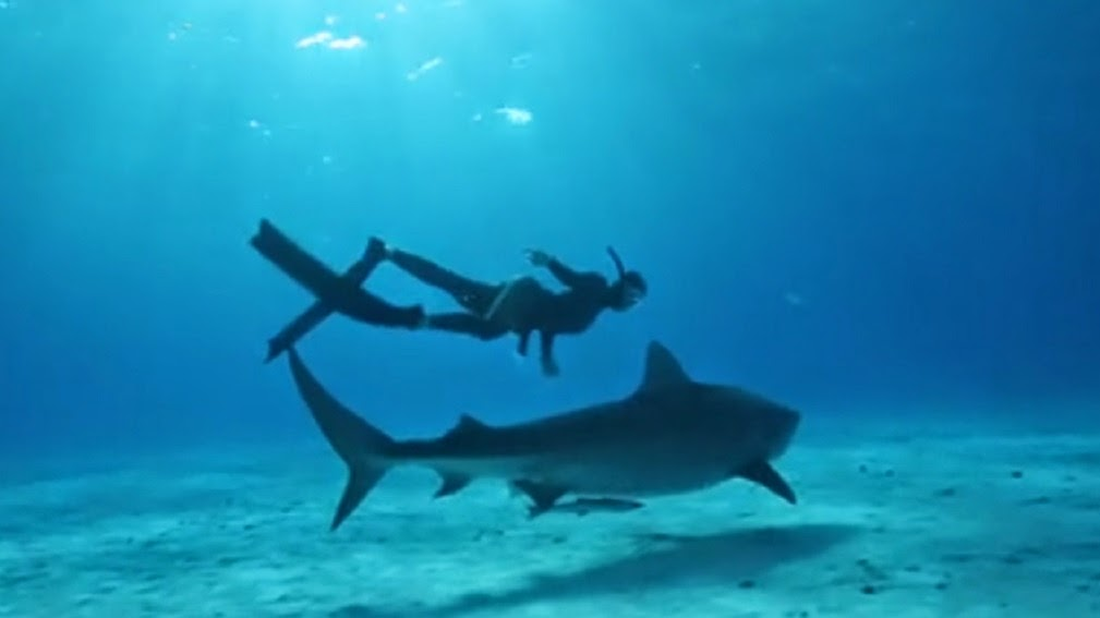 Hanli Prinsloo freedives with great white shark in documentary Oceanminded