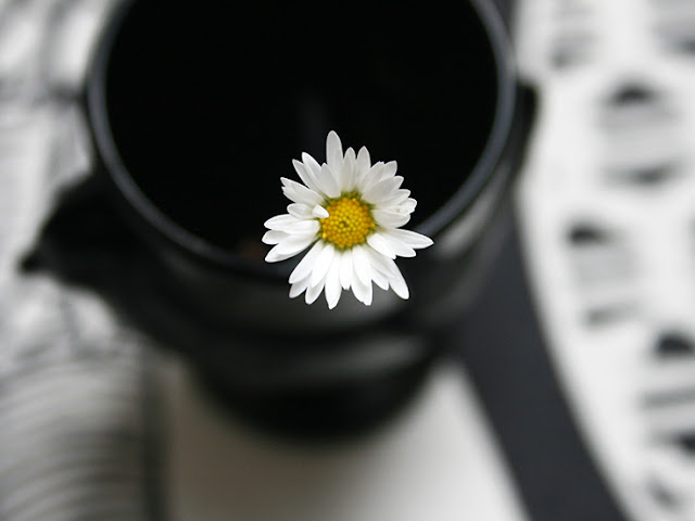 daisy in an egg cup, black and white