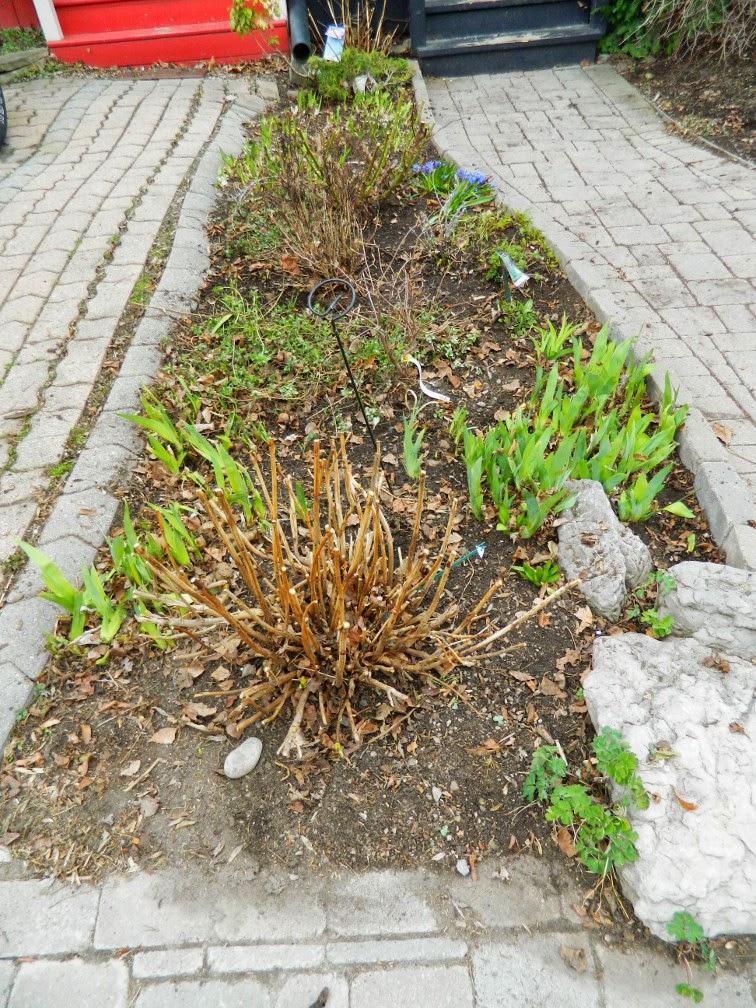 Spring garden cleanup Leslieville after Paul Jung Gardening Services Toronto